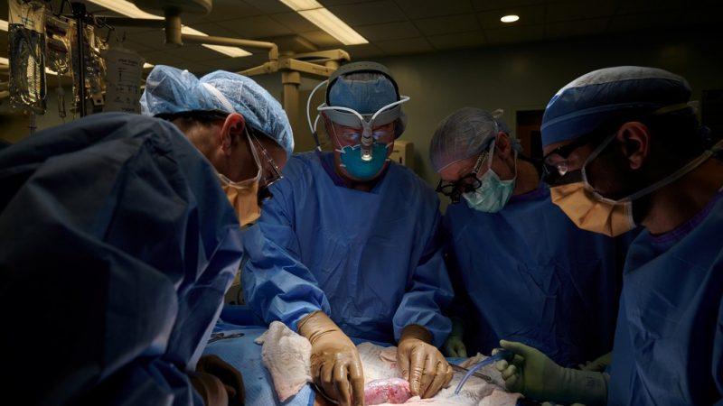 Foto: Joe Carrotta para NYU Langone Health / via Reuters